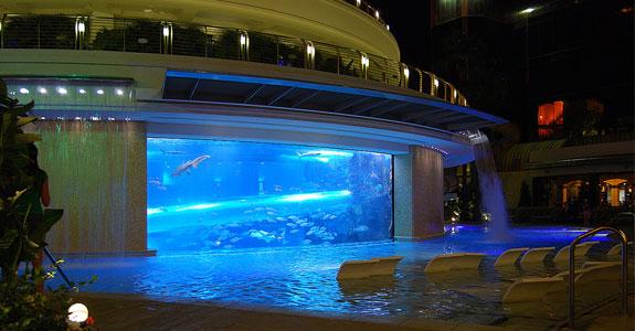 Tobogan de piscina en acuario con tiburones tobog n de for Piscinas para peces